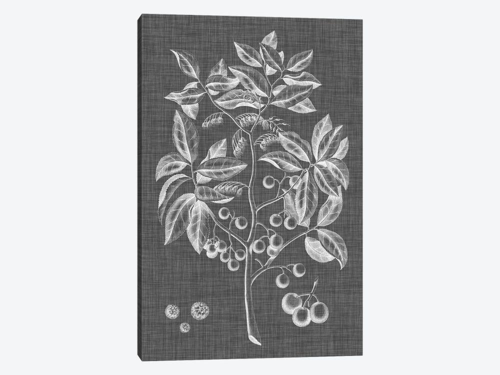 Graphic Foliage VI by Vision Studio 1-piece Art Print