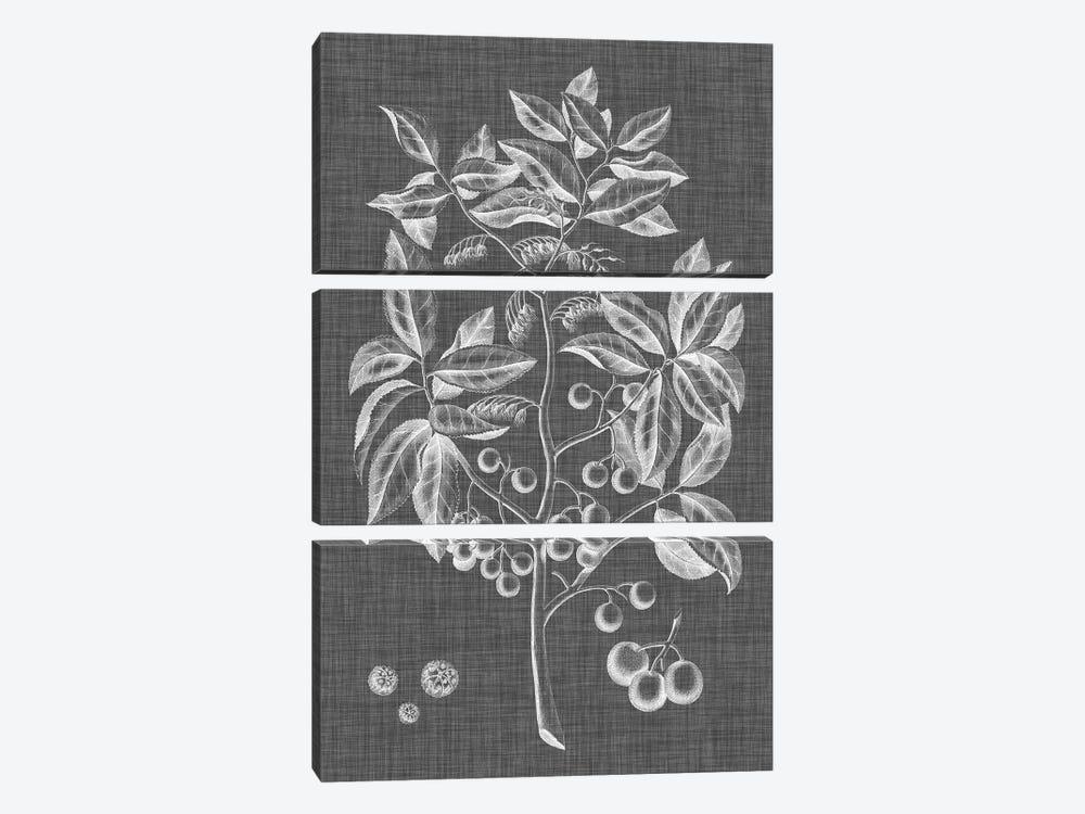 Graphic Foliage VI by Vision Studio 3-piece Canvas Art Print