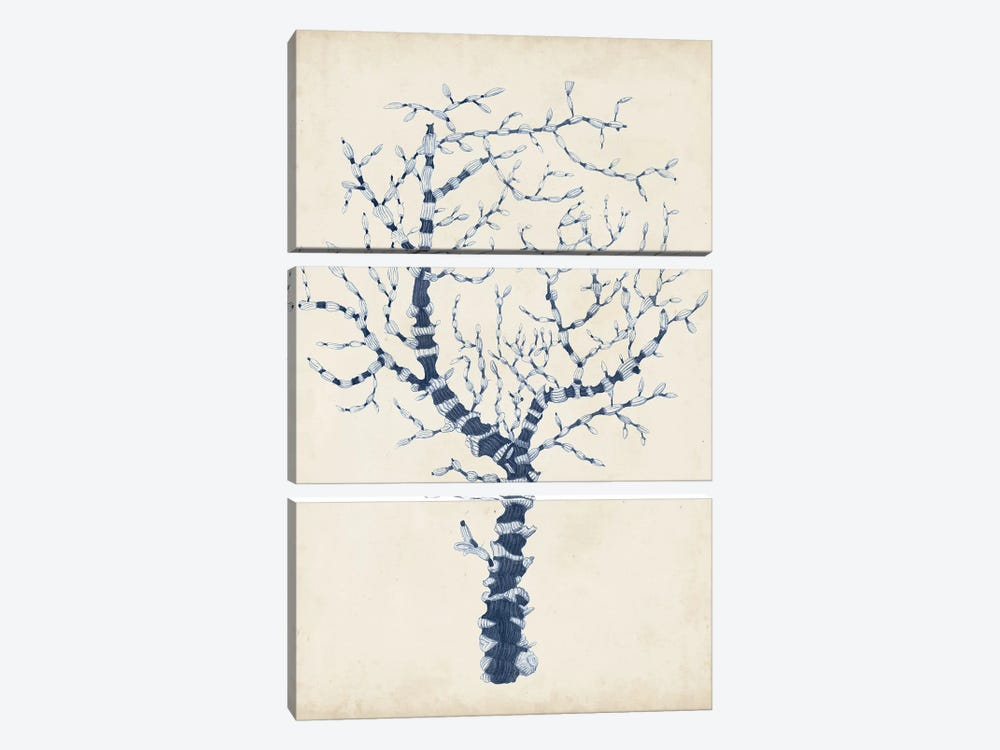 Indigo Coral II by Vision Studio 3-piece Canvas Print