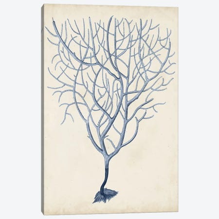 Indigo Coral III Canvas Print #VSN264} by Vision Studio Art Print