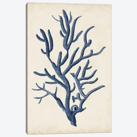 Indigo Coral IV Canvas Print #VSN265} by Vision Studio Canvas Art Print
