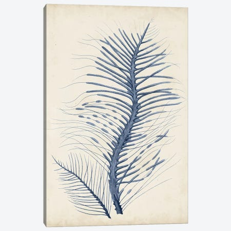 Indigo Coral V Canvas Print #VSN266} by Vision Studio Canvas Print