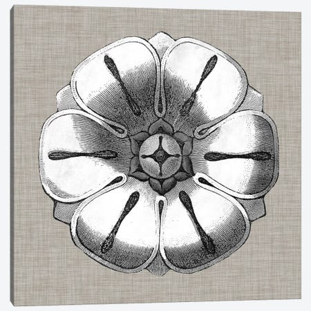 Neutral Rosette Detail I Canvas Print #VSN274} by Vision Studio Canvas Artwork