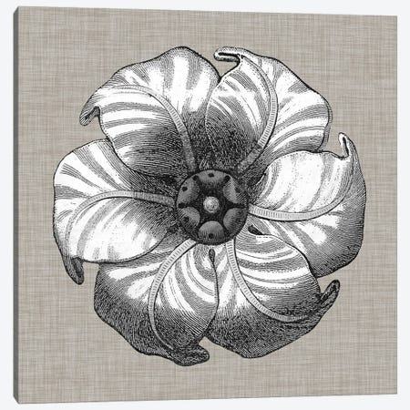Neutral Rosette Detail III Canvas Print #VSN276} by Vision Studio Canvas Artwork