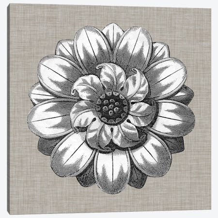 Neutral Rosette Detail IV Canvas Print #VSN277} by Vision Studio Canvas Art