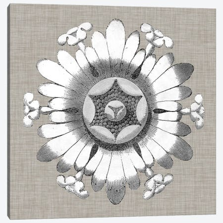 Neutral Rosette Detail V Canvas Print #VSN278} by Vision Studio Canvas Art Print