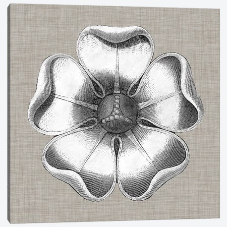 Neutral Rosette Detail VI Canvas Print #VSN279} by Vision Studio Art Print