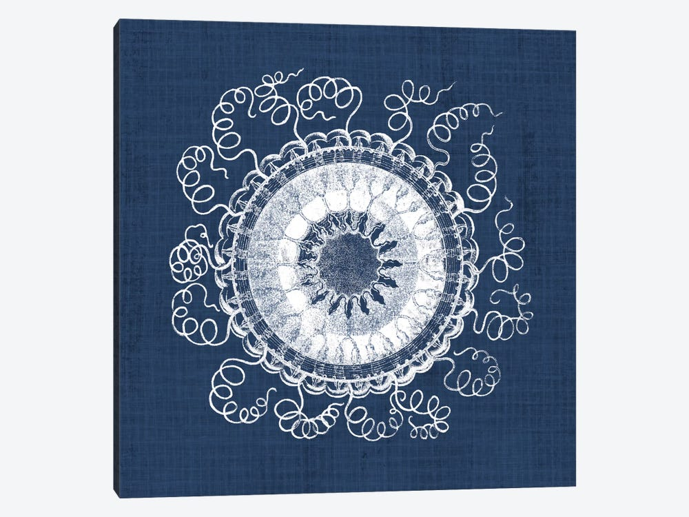 Sea Anemone on Indigo IV by Vision Studio 1-piece Canvas Print