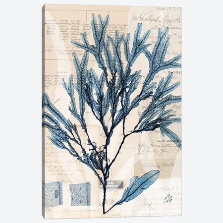 Seaweed Arrangement I Canvas Print #VSN288} by Vision Studio Canvas Art