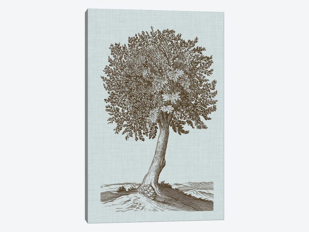 Antique Tree In Sepia I by Vision Studio 1-piece Canvas Wall Art