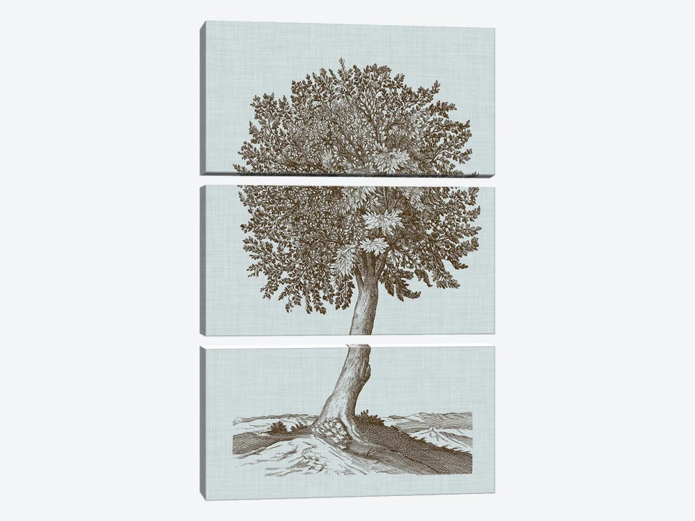 Antique Tree In Sepia I by Vision Studio 3-piece Canvas Wall Art