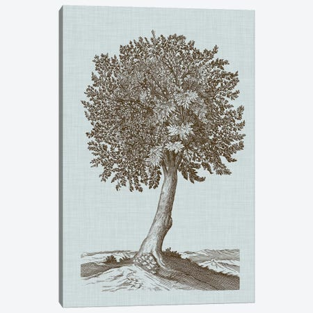 Antique Tree In Sepia I Canvas Print #VSN299} by Vision Studio Canvas Art Print