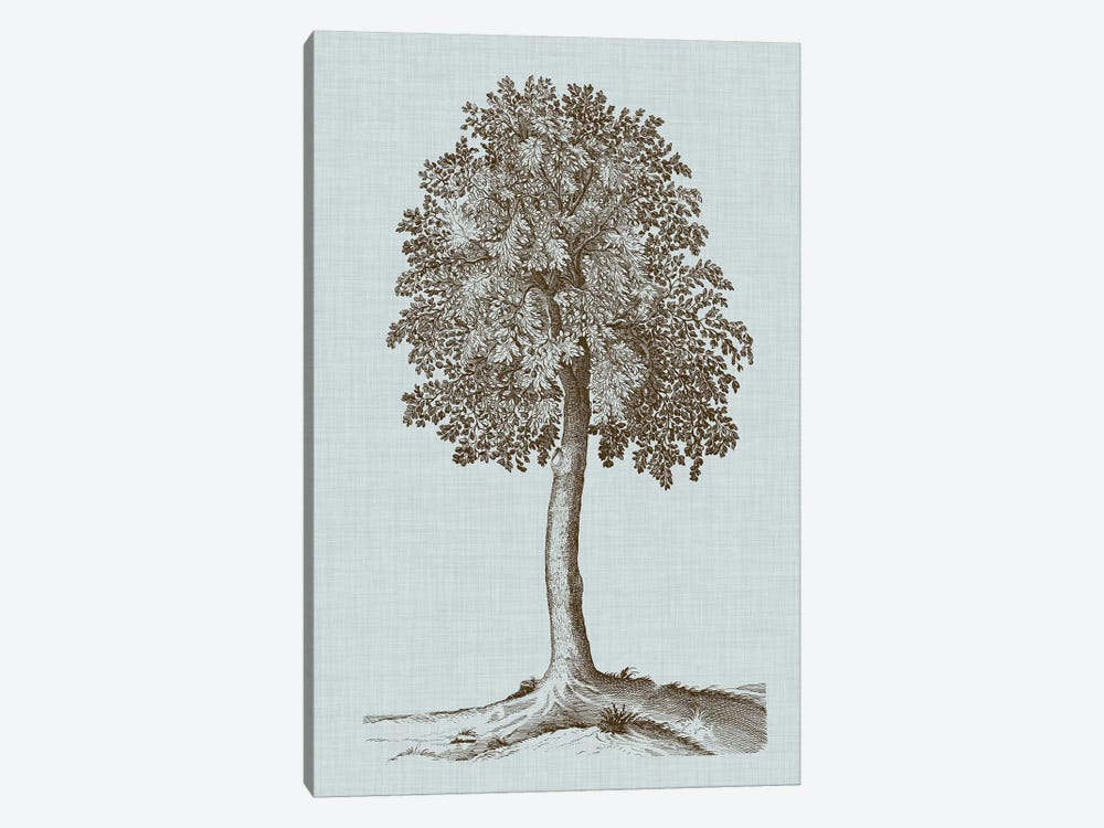 Antique Tree In Sepia II by Vision Studio 1-piece Canvas Art Print