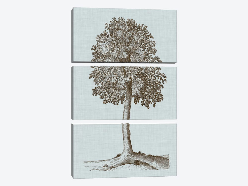 Antique Tree In Sepia II by Vision Studio 3-piece Canvas Art Print