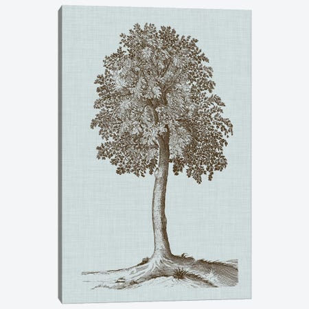 Antique Tree In Sepia II Canvas Print #VSN300} by Vision Studio Art Print