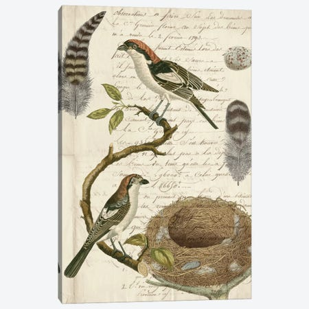 Avian Journal I Canvas Print #VSN301} by Vision Studio Canvas Print