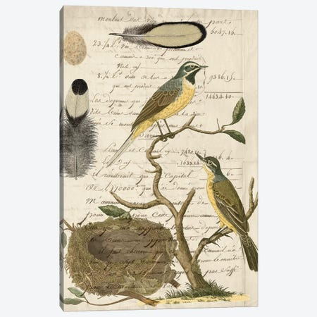 Avian Journal II Canvas Print #VSN302} by Vision Studio Art Print