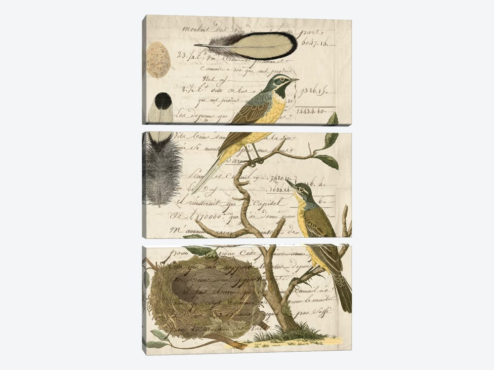 Avian Journal II by Vision Studio 3-piece Canvas Art Print