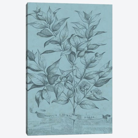 Botanical On Teal I Canvas Print #VSN309} by Vision Studio Art Print