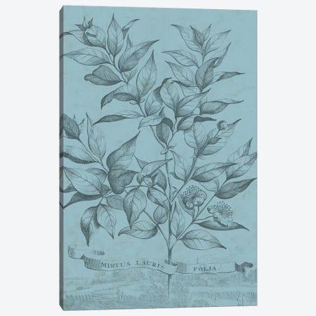 Botanical On Teal I Canvas Print #VSN309} by Vision Studio Art Print