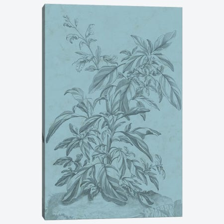 Botanical On Teal III Canvas Print #VSN311} by Vision Studio Canvas Artwork