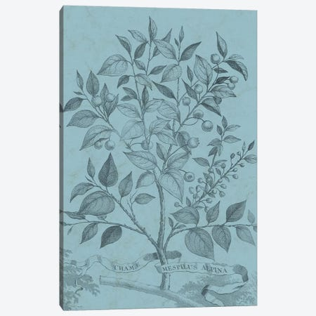 Botanical On Teal V Canvas Print #VSN313} by Vision Studio Canvas Art