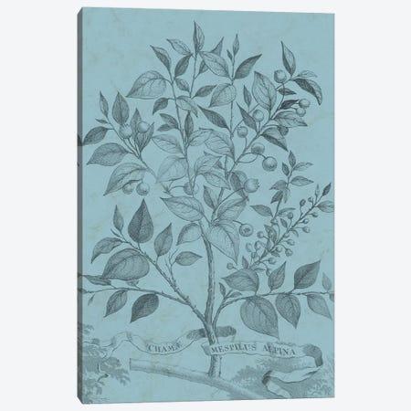 Botanical On Teal V Canvas Print #VSN313} by Vision Studio Canvas Art