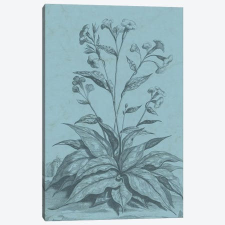 Botanical On Teal VI Canvas Print #VSN314} by Vision Studio Canvas Print