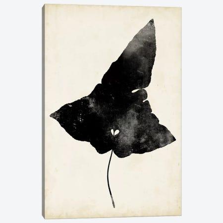 Fern Silhouette I Canvas Print #VSN315} by Vision Studio Canvas Art Print