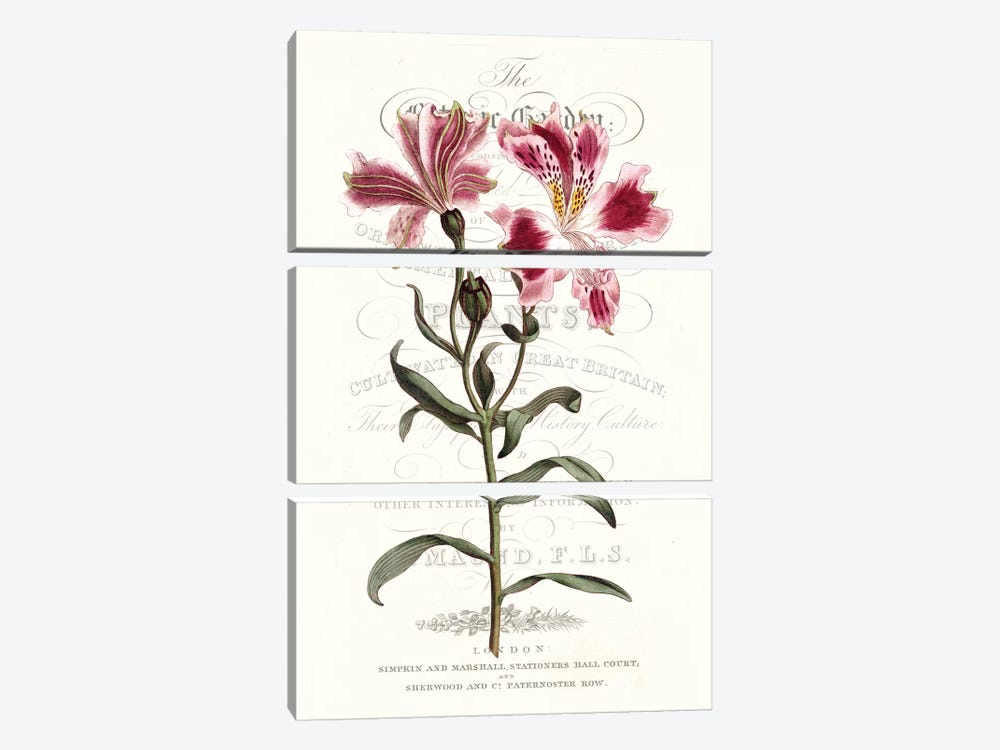 Flower Garden Varietals II by Vision Studio 3-piece Art Print