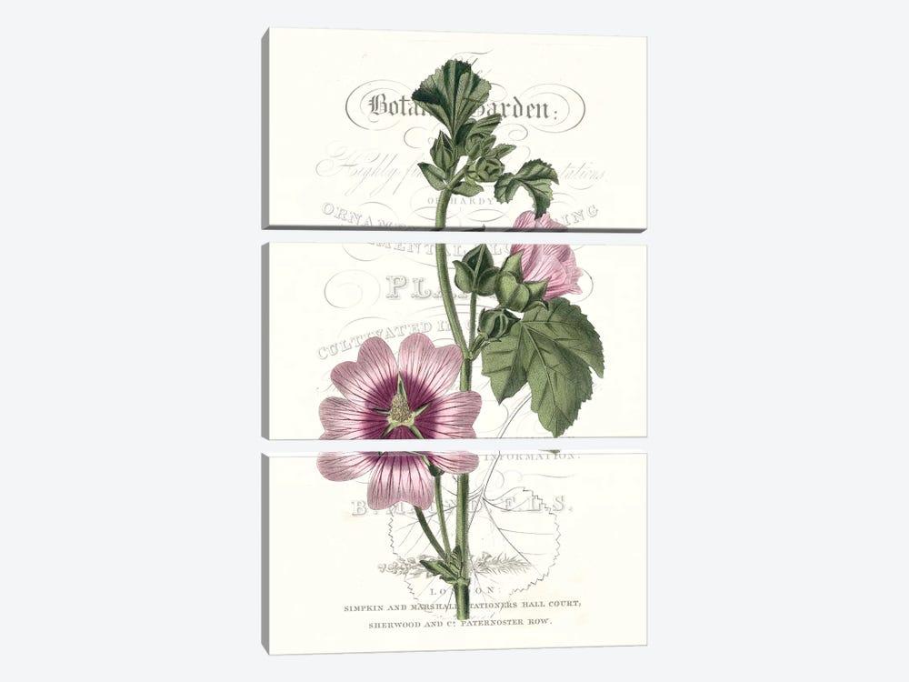 Flower Garden Varietals IV by Vision Studio 3-piece Canvas Print
