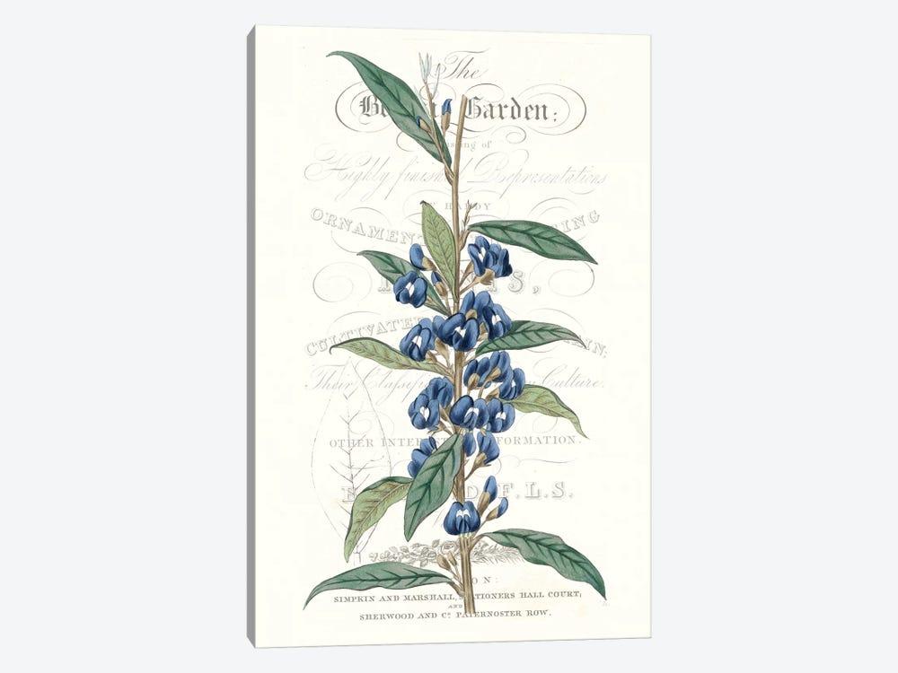 Flower Garden Varietals VI by Vision Studio 1-piece Canvas Art Print