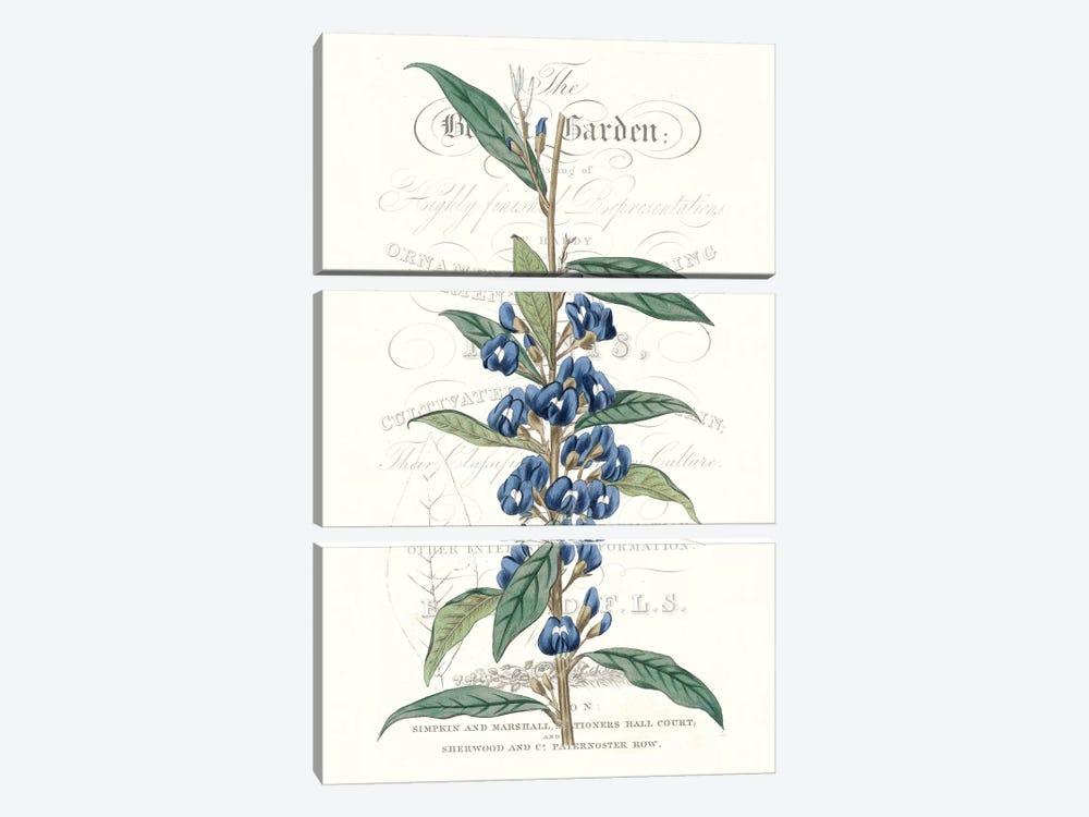Flower Garden Varietals VI by Vision Studio 3-piece Art Print
