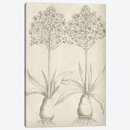 Fresco Floral I Canvas Print #VSN327} by Vision Studio Canvas Artwork