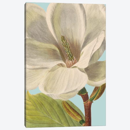 Fresh Florals I Canvas Print #VSN329} by Vision Studio Canvas Print