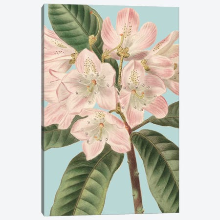 Fresh Florals II Canvas Print #VSN330} by Vision Studio Canvas Artwork