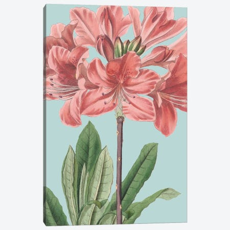 Fresh Florals III Canvas Print #VSN331} by Vision Studio Canvas Art