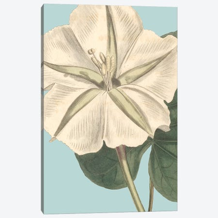 Fresh Florals IV Canvas Print #VSN332} by Vision Studio Canvas Wall Art