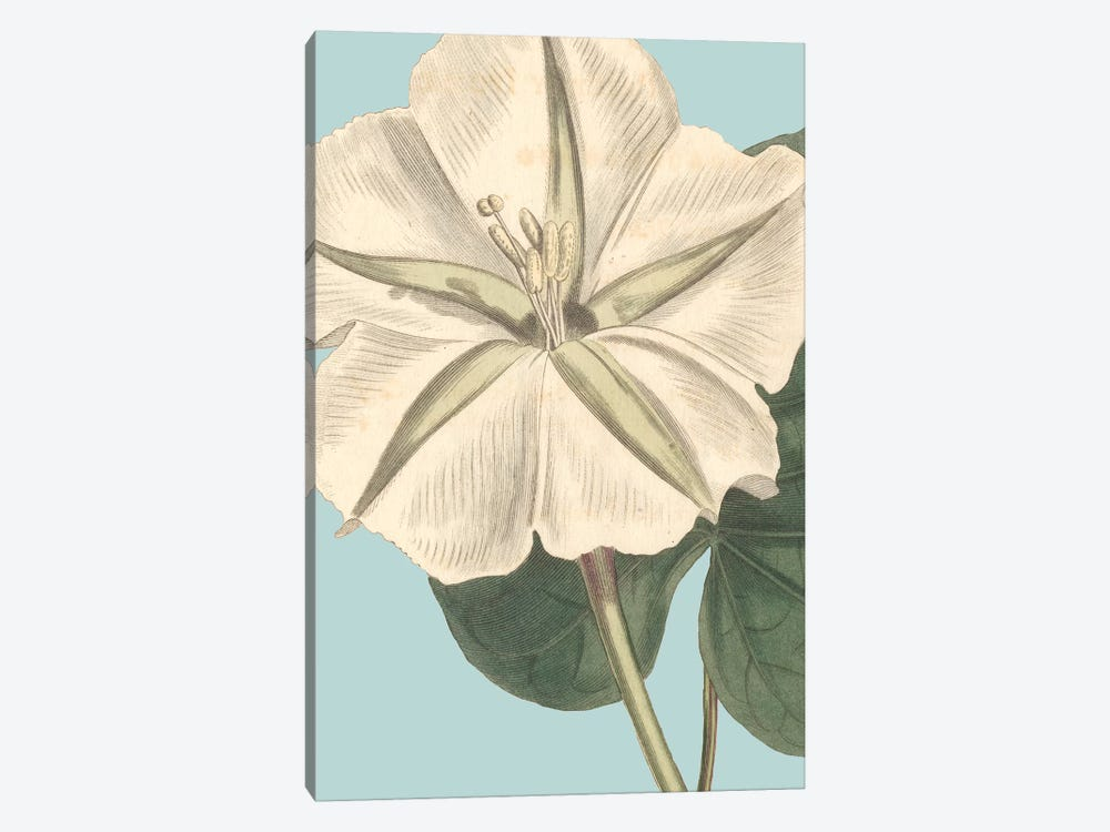 Fresh Florals IV by Vision Studio 1-piece Canvas Wall Art