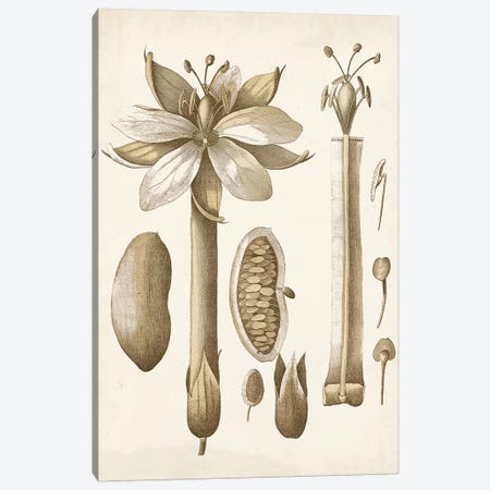 Ochre Botanical I Canvas Print #VSN343} by Vision Studio Canvas Art Print