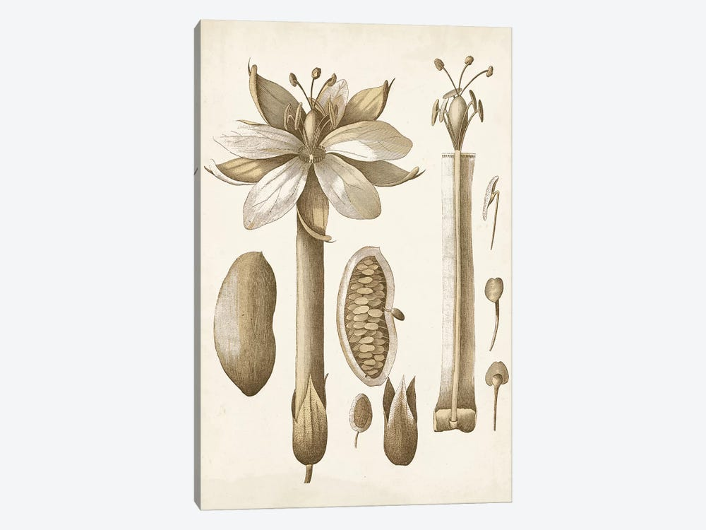Ochre Botanical I 1-piece Canvas Art