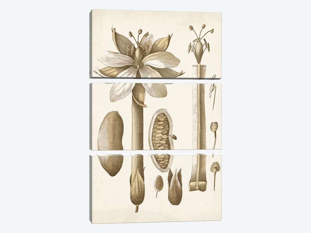 Ochre Botanical I by Vision Studio 3-piece Canvas Artwork