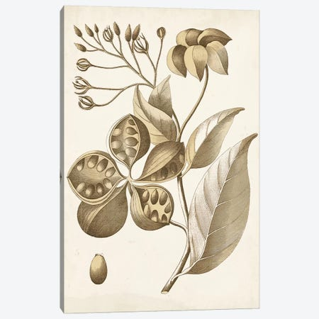 Ochre Botanical II Canvas Print #VSN344} by Vision Studio Canvas Art