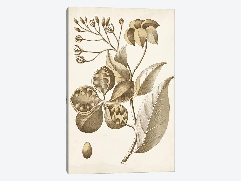 Ochre Botanical II by Vision Studio 1-piece Canvas Art Print