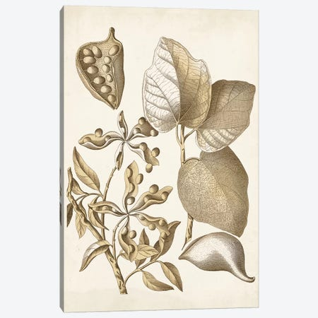 Ochre Botanical III Canvas Print #VSN345} by Vision Studio Canvas Artwork