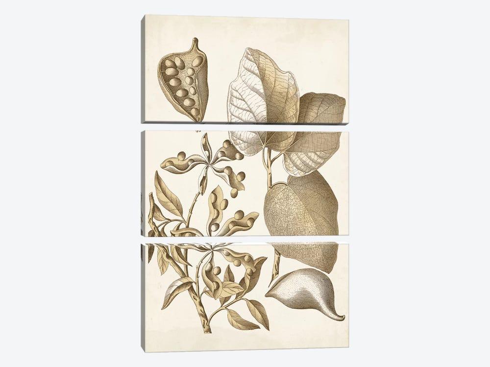 Ochre Botanical III by Vision Studio 3-piece Canvas Artwork