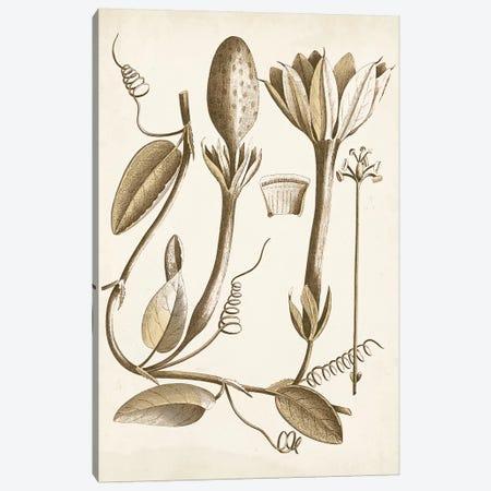 Ochre Botanical IV Canvas Print #VSN346} by Vision Studio Canvas Artwork