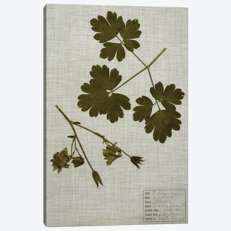 Pressed Leaves On Linen I Canvas Print #VSN355} by Vision Studio Canvas Art Print