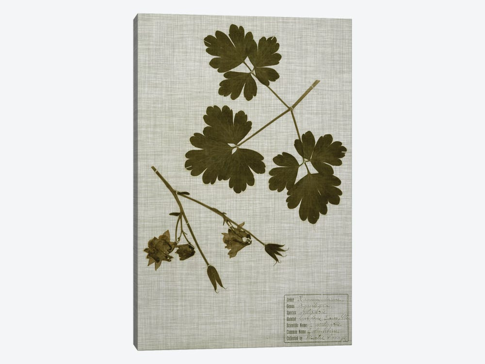 Pressed Leaves On Linen I by Vision Studio 1-piece Art Print