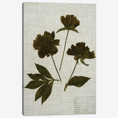 Pressed Leaves On Linen II 3-Piece Canvas #VSN356} by Vision Studio Canvas Print